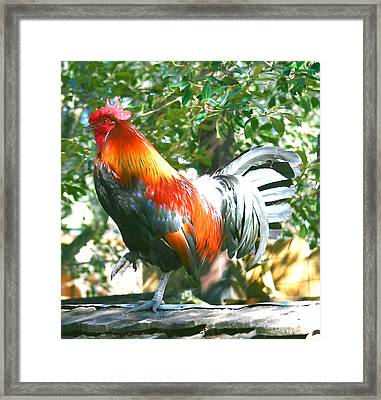 Luchenbach Rooster Framed Print