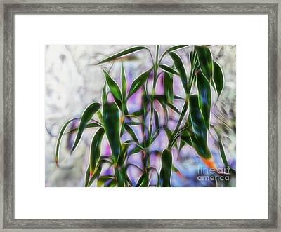Lucky Bamboo Framed Print
