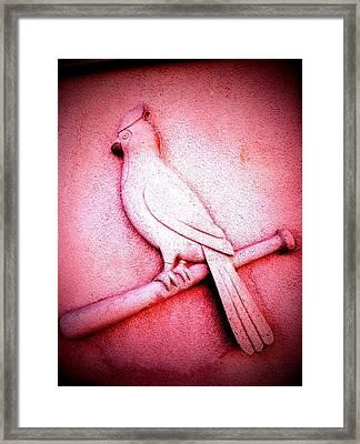 Lucky Bird Framed Print by John McGarity