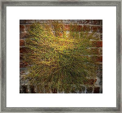 Lucky Charm Framed Print by Linda Covino