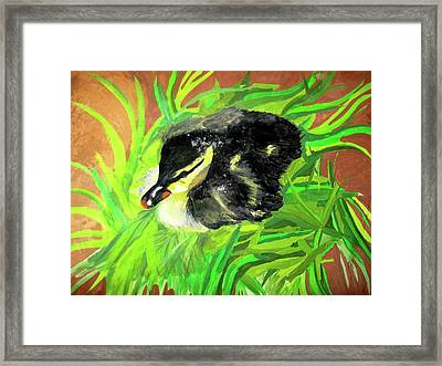 Lucky Duckling Framed Print