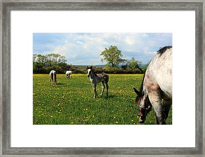 Lucky Horse Framed Print by Renata Vogl
