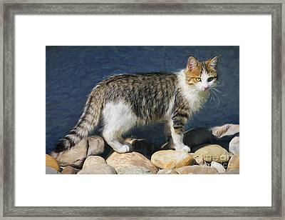 Lucky Is His Name Framed Print
