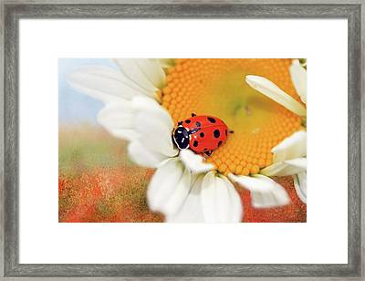 Lucky Lady Framed Print