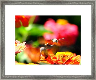 Framed Print featuring the photograph Lucky Shot by Ana Maria Edulescu