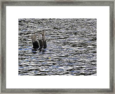 Framed Print featuring the photograph Lucky Stump by Angie Rea