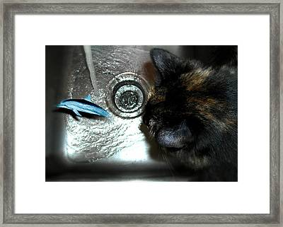 Lucy And The Dolphin Framed Print by Nilla Haluska