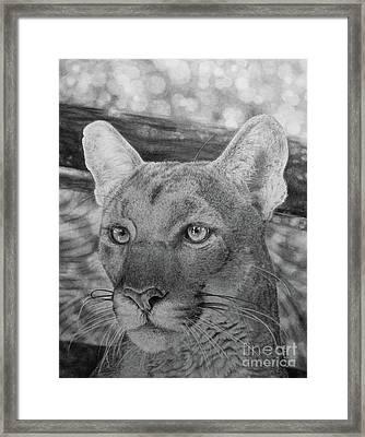 Lucy Framed Print by Jennifer Watson