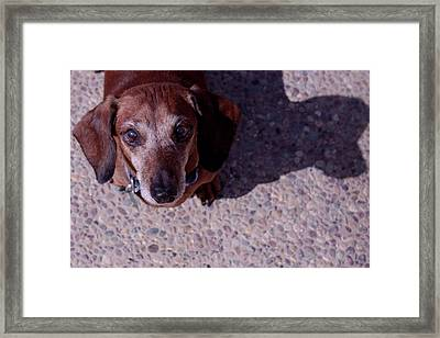 Framed Print featuring the photograph Lucy by Lora Lee Chapman