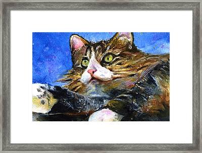 Lucy The Cat Framed Print by John D Benson