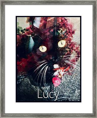 Lucy The Cat Framed Print