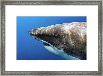 Lucy's Profile Framed Print by Shane Linke