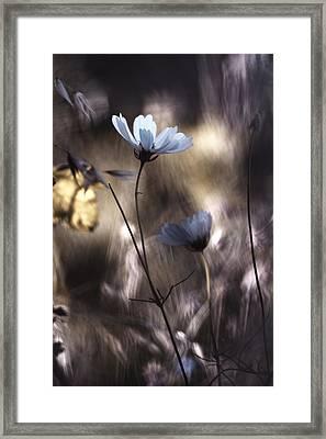 Lueur D'automne Framed Print by Fabien Bravin