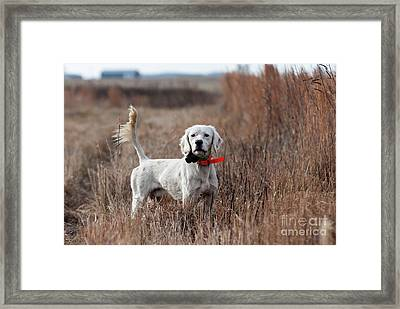Luke - D010076 Framed Print by Daniel Dempster