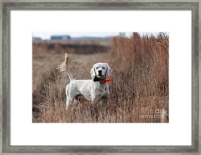 Framed Print featuring the photograph Luke - D010076 by Daniel Dempster