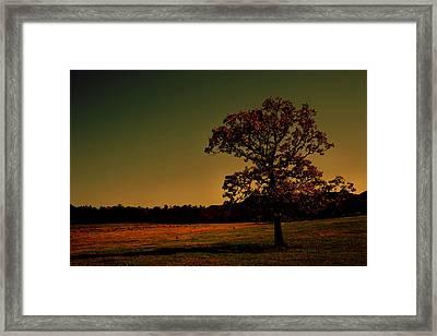 Lullabye Tree Framed Print by Nina Fosdick