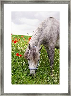 Lulu And The Poppies  Framed Print by Angela Doelling AD DESIGN Photo and PhotoArt