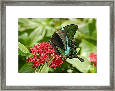 Luminescence Framed Print by David Lee Thompson
