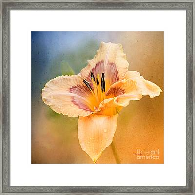 Framed Print featuring the photograph Luminosity by Betty LaRue