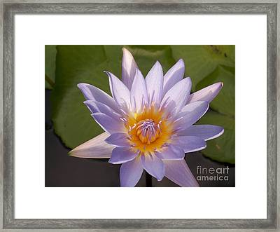 Luminous Beauty Framed Print