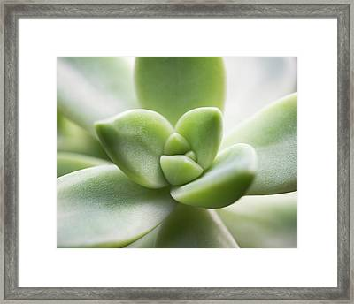 Luminous Framed Print