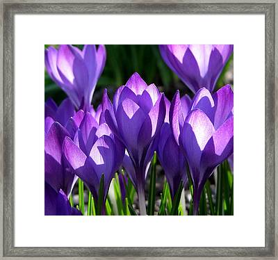 Framed Print featuring the photograph Luminous Floral Geometry by Byron Varvarigos