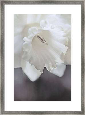 Framed Print featuring the photograph Luminous Ivory Daffodil Flower by Jennie Marie Schell