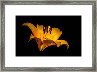 Luminous Lilly Framed Print