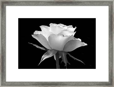 Luminous Rose Framed Print