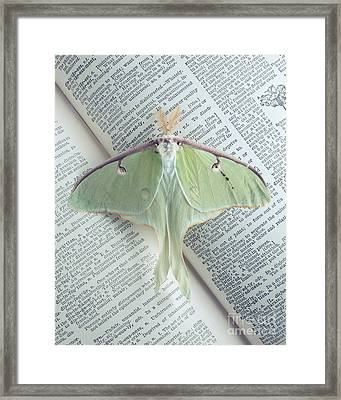 Luna Moth On Book Framed Print by Edward Fielding