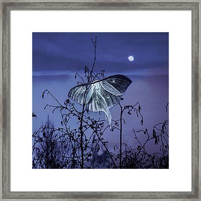 Luna Nights Framed Print