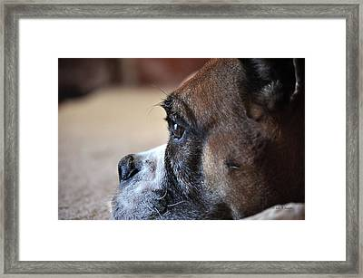 Luna The Boxer 02 Framed Print