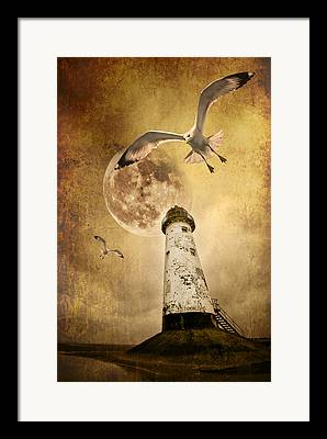 Flying Seagull Framed Prints