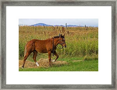 Lunch Break Framed Print by Alana Thrower