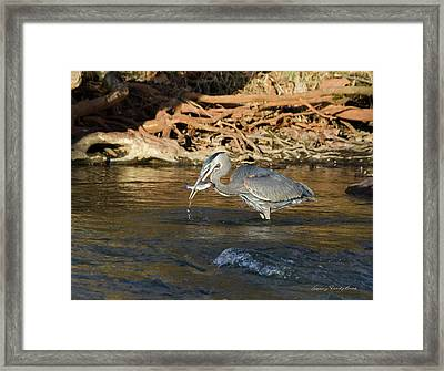 Framed Print featuring the photograph Lunch On The Neuse River by George Randy Bass