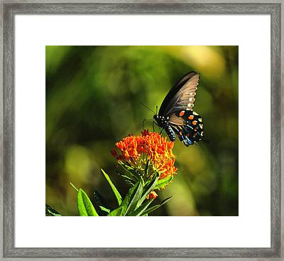 Framed Print featuring the photograph Lunch by Rick Friedle