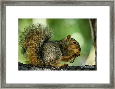 Lunch Framed Print by Robert Bales