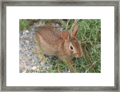 Lunch Time Framed Print by Amy Holmes