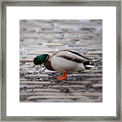 Framed Print featuring the photograph Lunch Time by Jeremy Lavender Photography