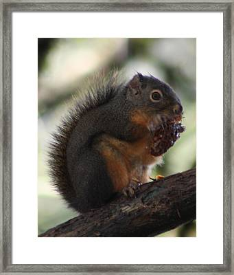 Lunch Time Framed Print by Nick Gustafson