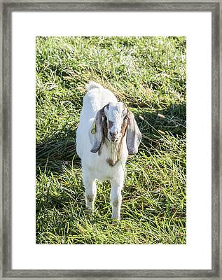 Lunch Time. Framed Print