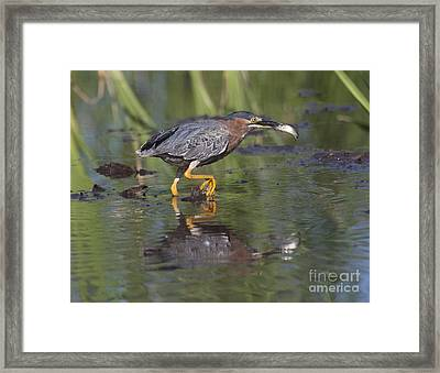 Lunch To Go Framed Print by Ruth Jolly