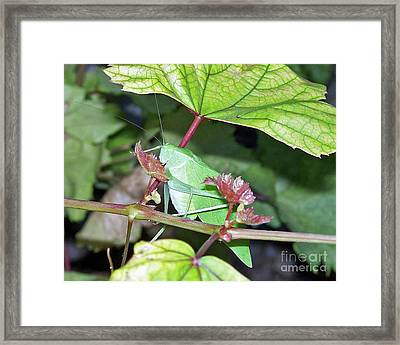 Lunching At The Vine Framed Print