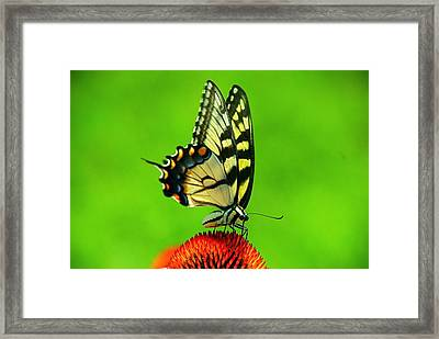 Framed Print featuring the photograph Lunchtime by Byron Varvarigos