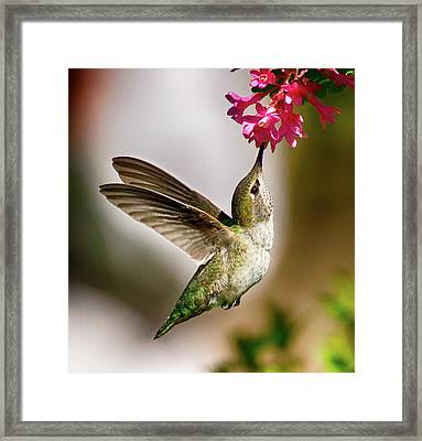Lunchtime Framed Print by Sheldon Bilsker