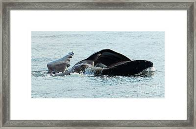 Lunge Fishing Framed Print by Mike Dawson