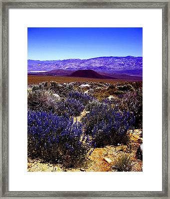 Lupin At Taboose Creek Trail Framed Print by Tina Slee