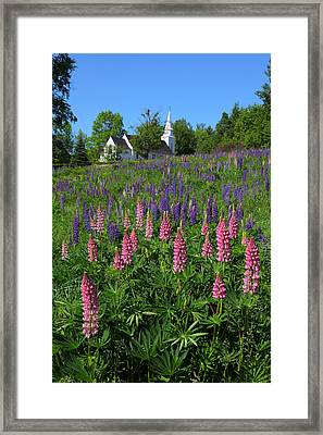 Lupin Church Framed Print