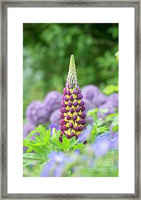 Lupin Manhattan Lights Framed Print