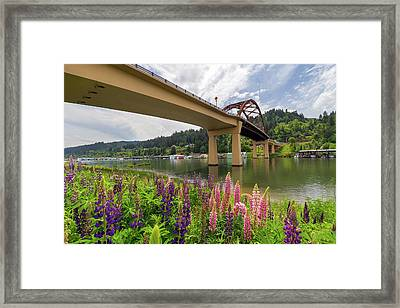 Lupine In Bloom By Sauvie Island Bridge Framed Print by David Gn